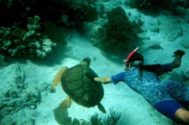 homestay hoi an cham island ocean 1024x678 640x480 - HOI AN - CHAM ISLANDS - HOI AN/ 1 DAY