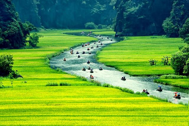 du lịch Ninh Bình ngắm ruộng lúa chín 640x480 - NINH BINH PRIVATE TOUR